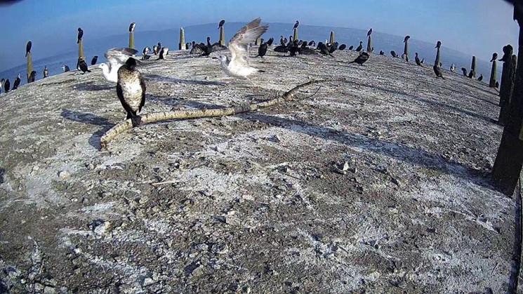 За птахами Галицького природного парку м…