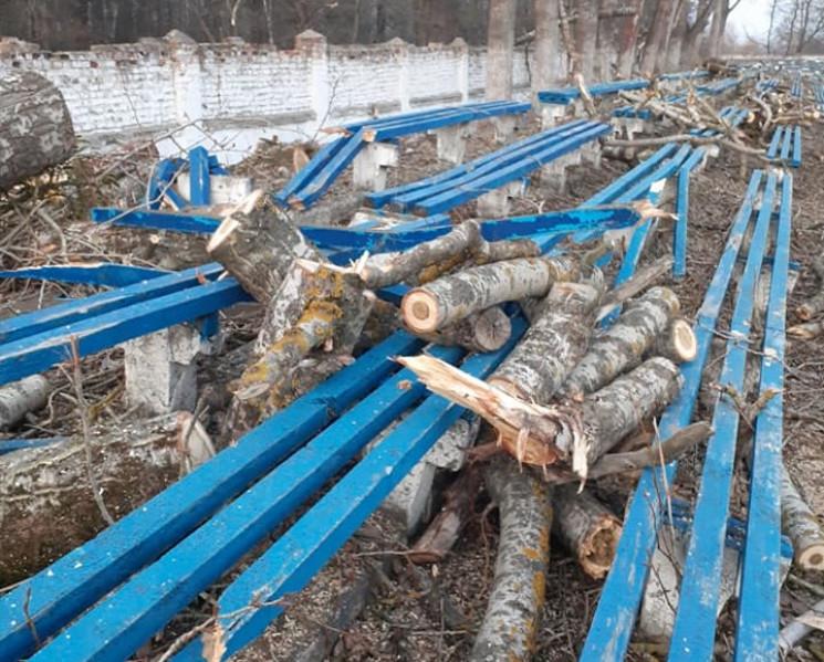 У Шепетівці комунальники обрізали дерева…