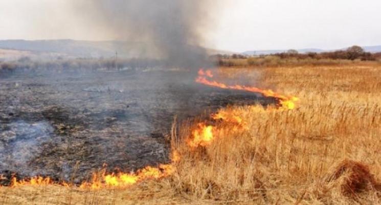 На Прикарпатті під час спалювання сухост…