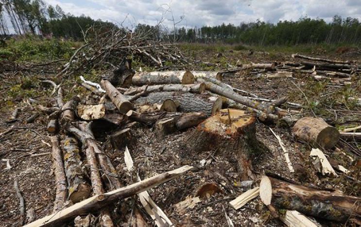 На Харьковщине работники лесничества не…