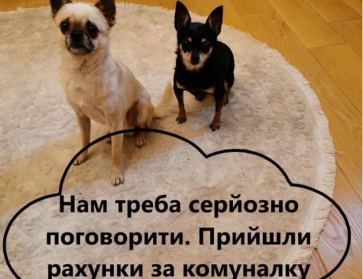 Собачья коммуналка: Сколько собачек и хо…