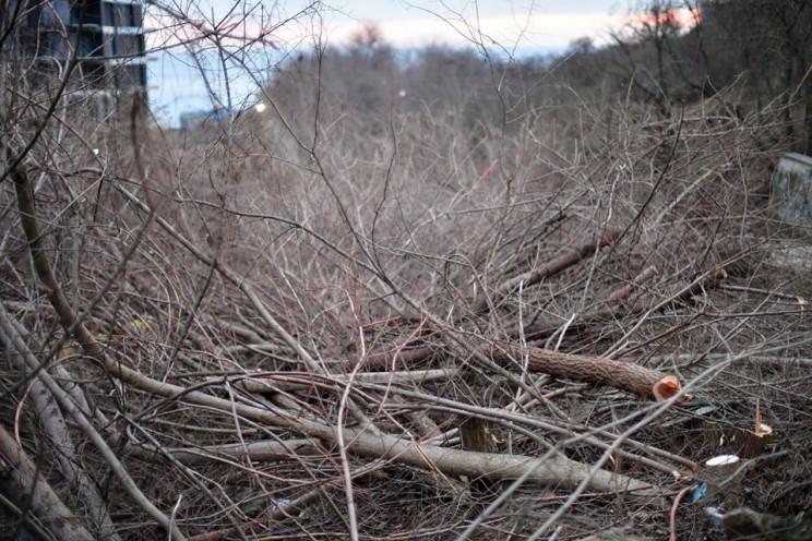 Замість сотень знищених дерев  –  десятк…