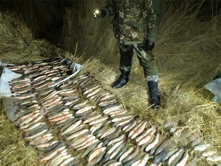 Троє кубанських браконьєрів завдали збит…