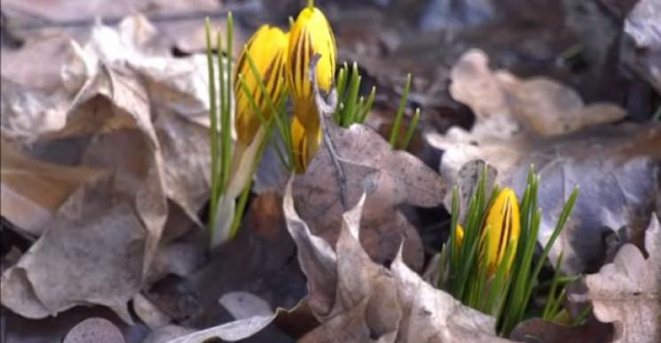 В Харькове в начале февраля начали цвест…