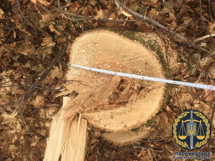 У Харкові браконьєри знищили 70 дерев у…
