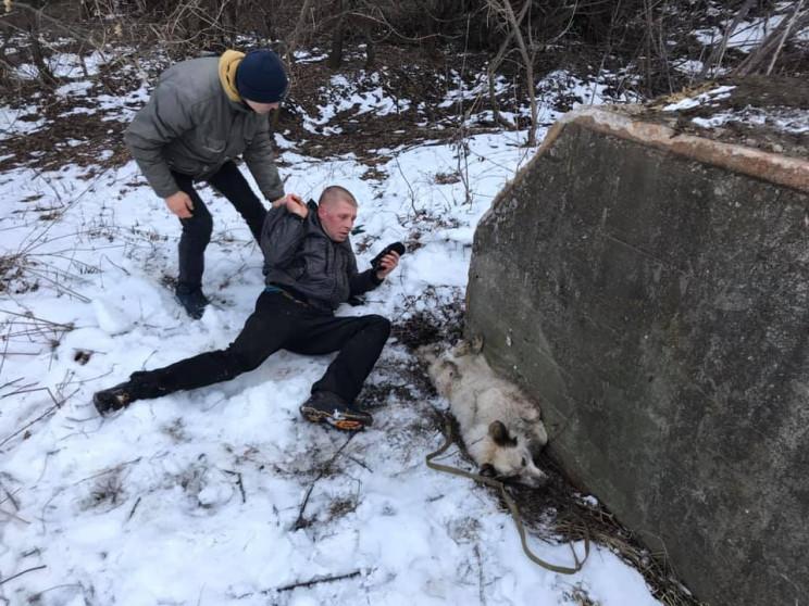 У Сумах живодер намагався вбити собаку…