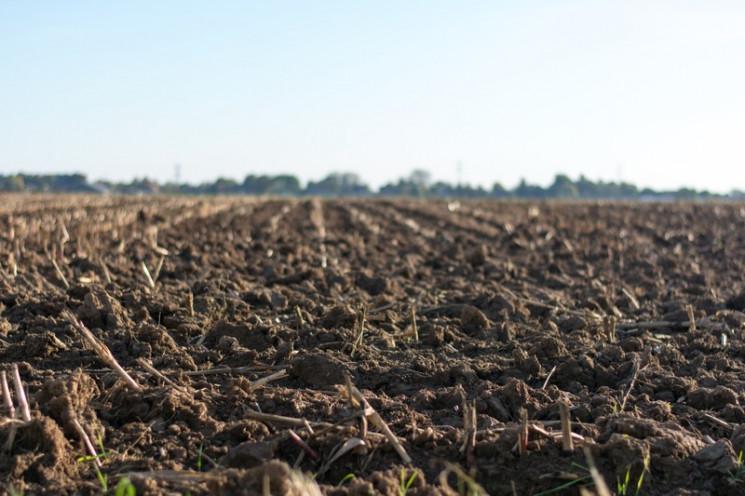 У херсонского фермера отобрали 50 гектар…