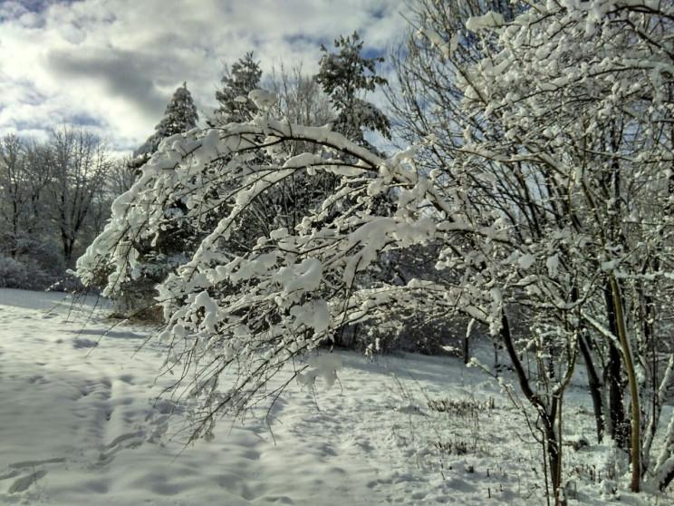 Як казково виглядає зима у Львівській об…