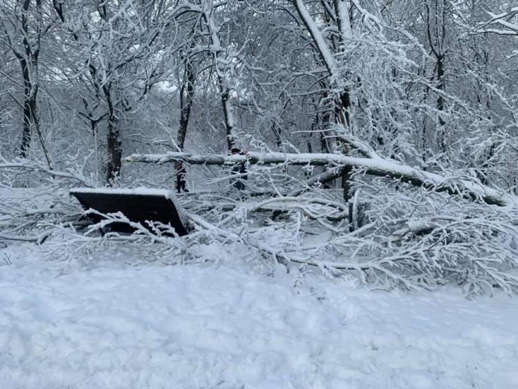 В Днепре ветер валил деревья в отремонти…