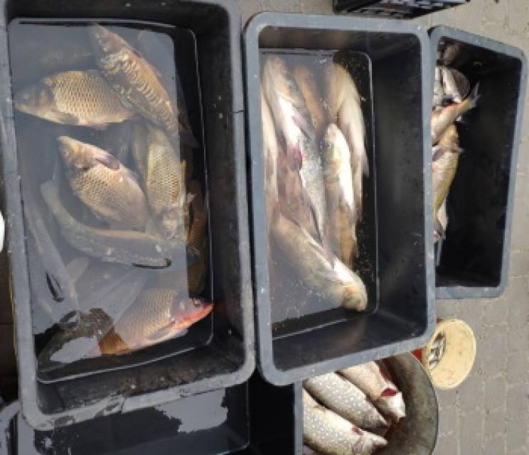 За січень браконьєри-рибалки завдали шко…