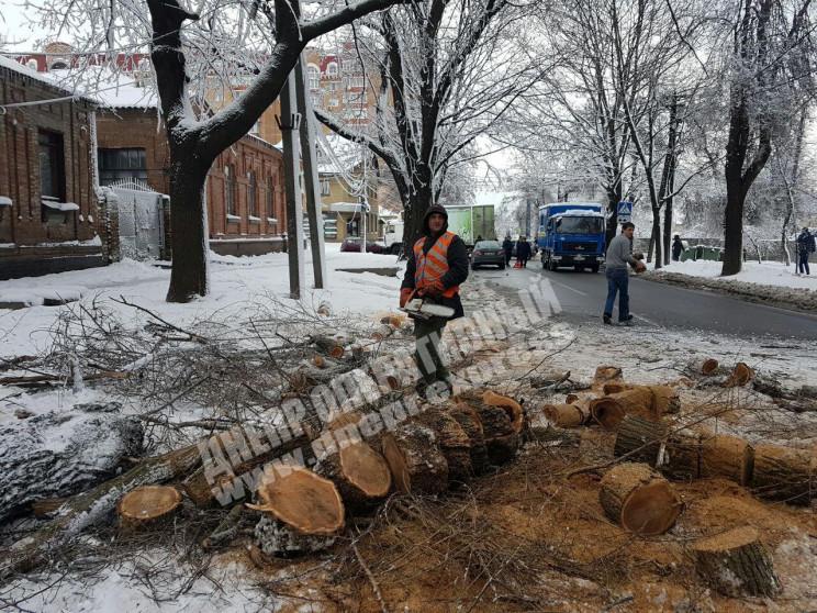 У Дніпрі через падіння дерева перекривал…
