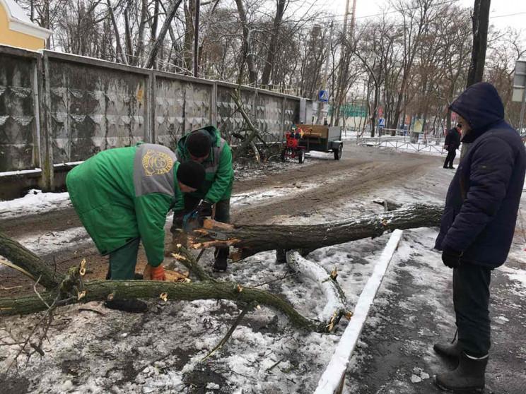 Негода повалила в Одесі понад 80 дерев…