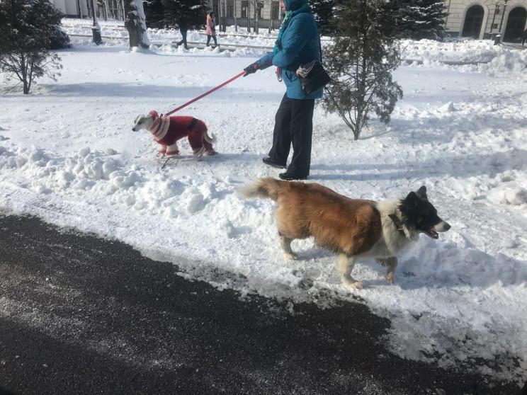 Люди вывели собак на митинг в центре Дне…
