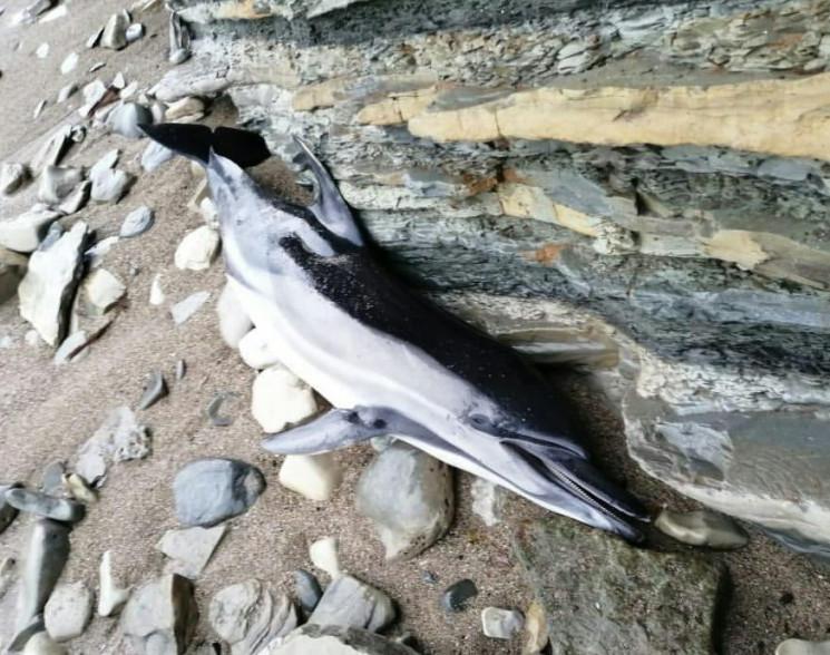 На узбережжі Чорного моря знаходять мерт…