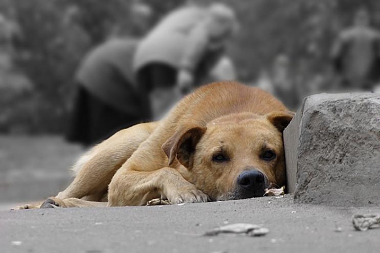 В Івано-Франківську невідомі труять соба…
