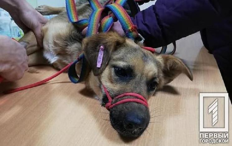 В Кривом Роге отравили собак возле обуст…