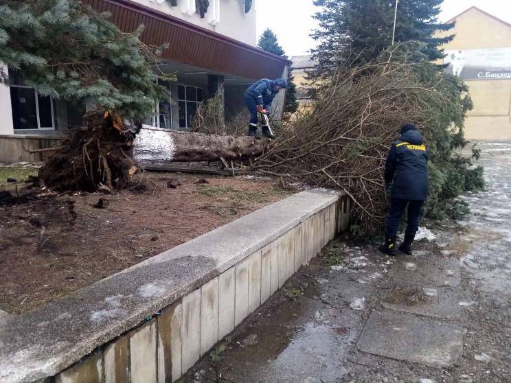 Шквальний вітер наламав дерев в Сколе і…