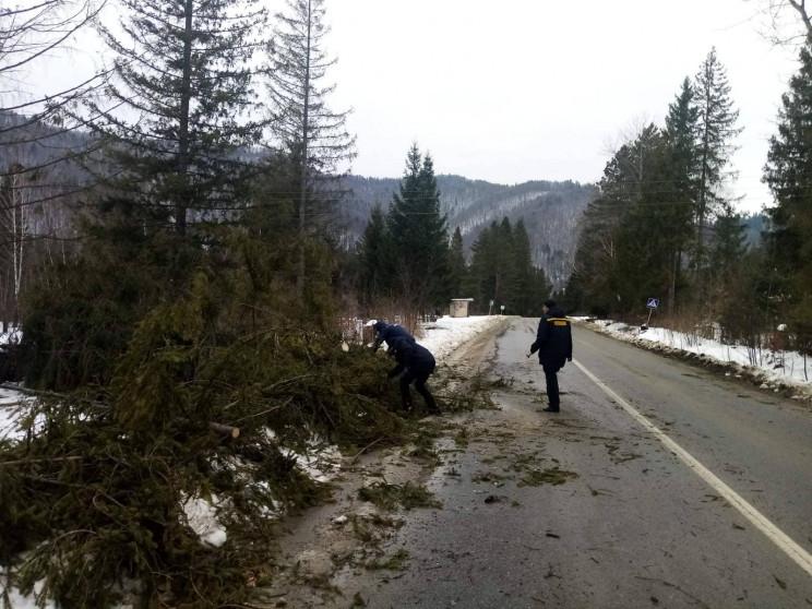 Сильний вітер наробив біди у Cколівськом…
