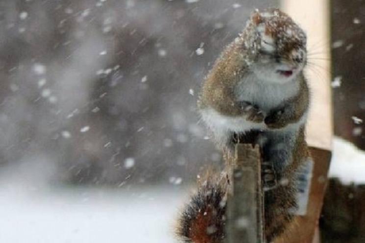 Суми засипатиме мокрим снігом…