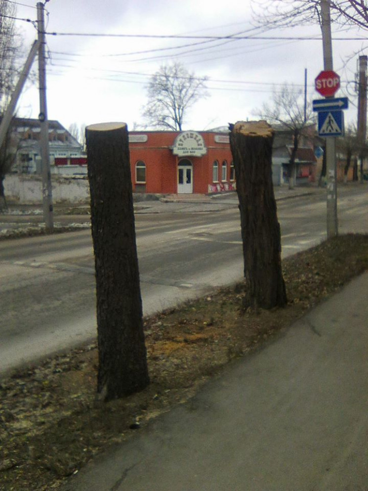 В центре Кропивницкого с двух деревьев с…