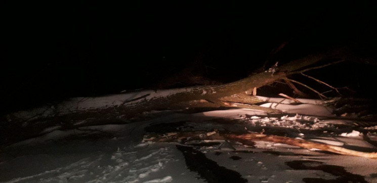 У Сумах через негоду дерево впало прямо…
