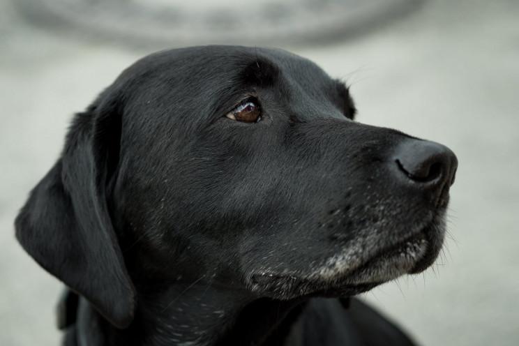 На Херсонщині невідомий підстрелив собак…