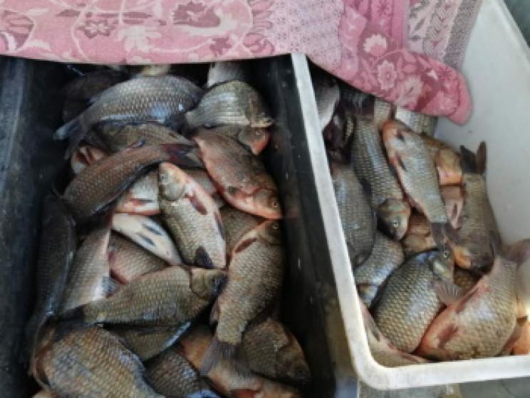 Уже в лютому рибоохоронці зафіксували 30…