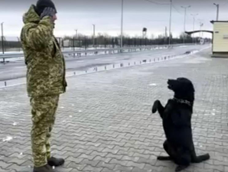 Як прикордонний пес на межі з анексовани…