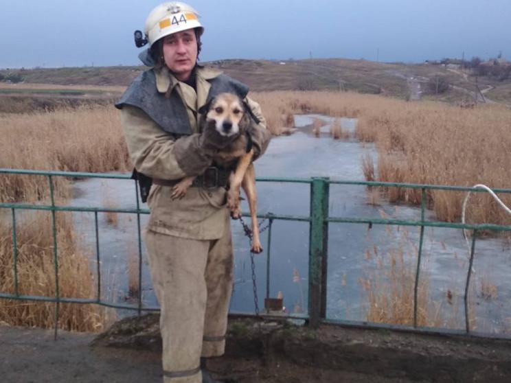 На Дніпропетровщині пес зачепився ланцюг…
