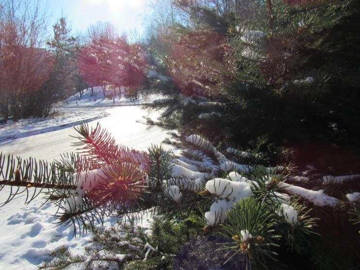 Снігопади поки вщухли: 14 лютого у Полта…