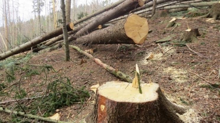 На Прикарпатті екологи відсудили у лісго…