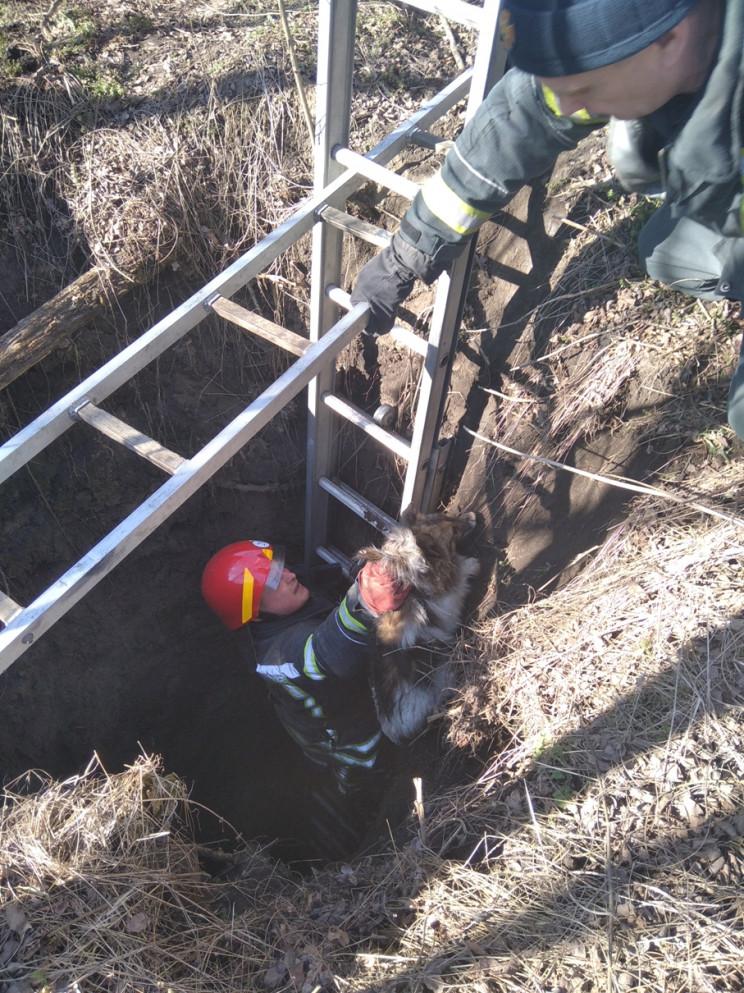 На Кропивнитчине из колодца спасли собак…