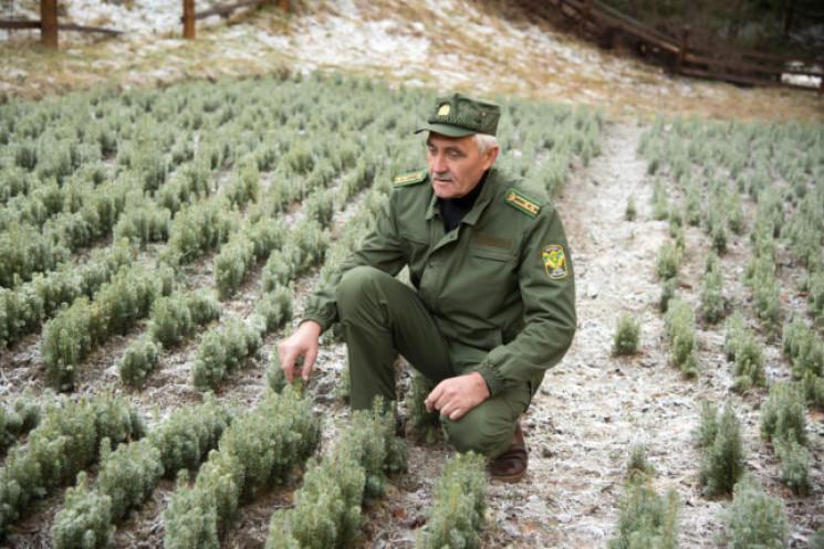 На Франківщині лісівники планують висади…