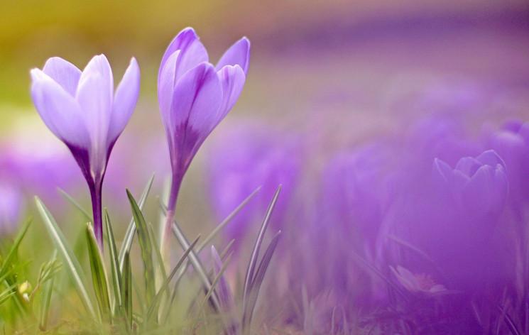 Почти весна: Самые интересные события пр…
