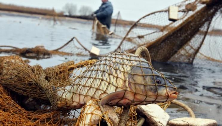 На Кубані браконьєри побили держінспекто…