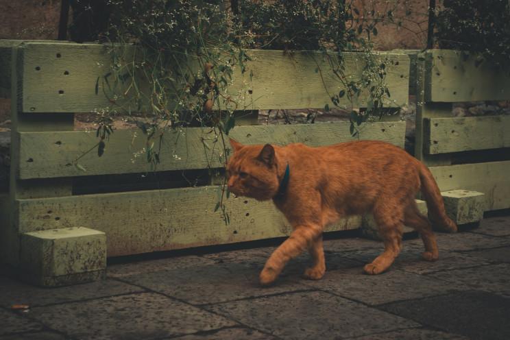 Місто Лева обладнають сотнею котівничок…