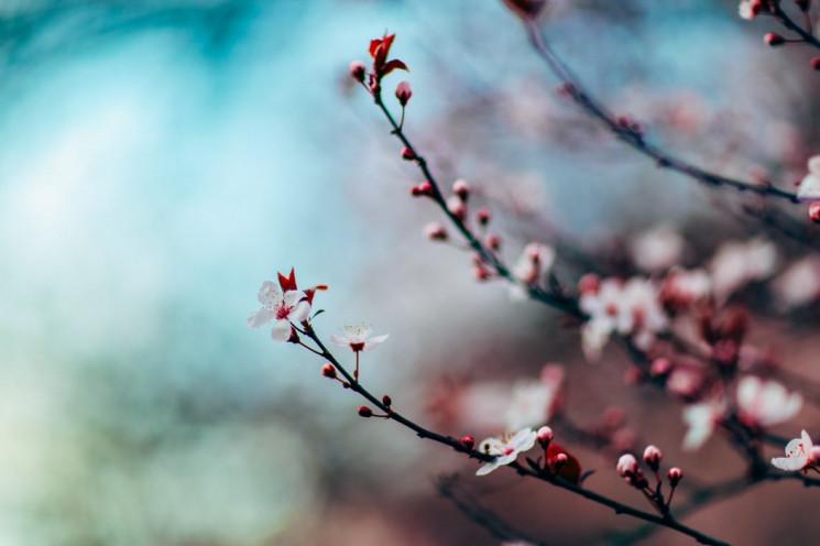 Весна близько: 45 захоплюючих і корисних…