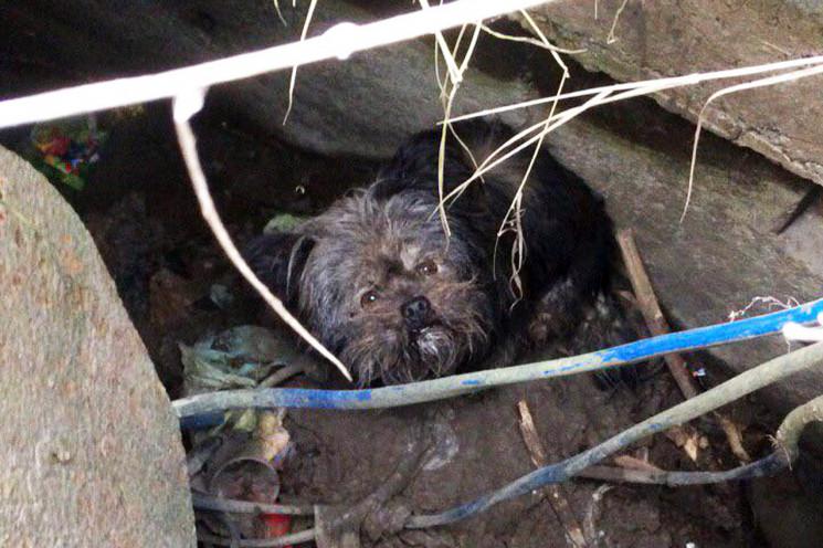 У Дунаївцях визволяли собаку з каналізац…