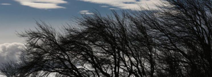 Повалені дерева і обірвані дроти: Терноп…