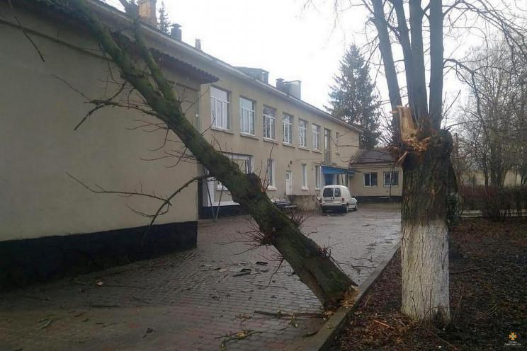 На Тернопільщині вітер повалив дерево на…
