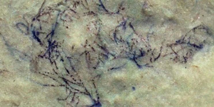 Науковці виявили водорості, яким мільярд…
