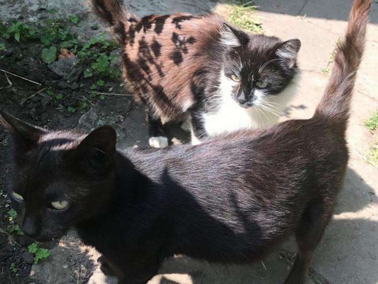 Влада Полтави визнала вуличних котів час…