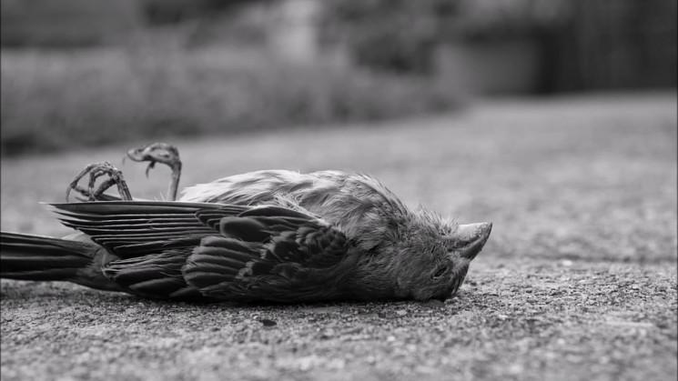 На Кубані масово гинуть птахи – експерти…