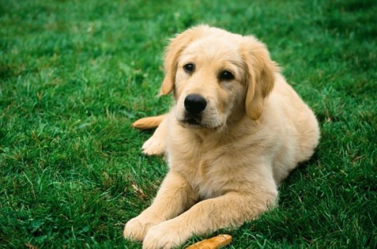 Вчені дослідили, чи дійсно собаки розумі…