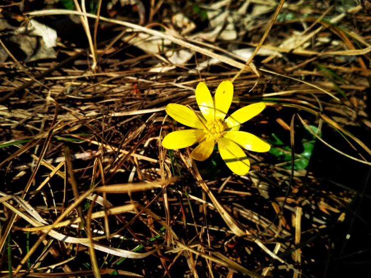 Весна у ландшафтному парку на Донеччині:…