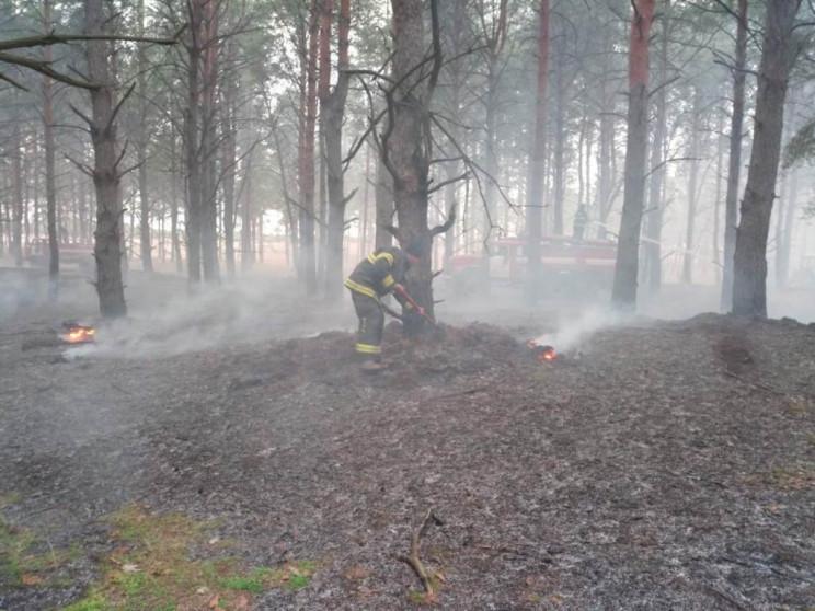 На Херсонщине начали гореть леса…