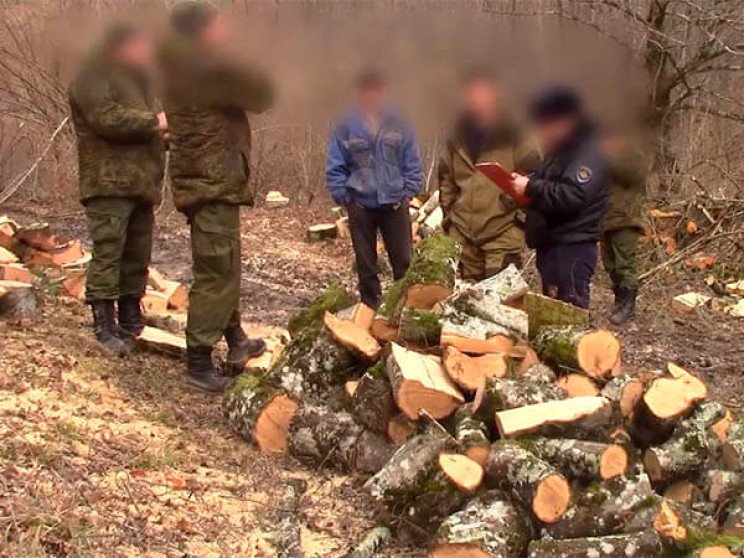 """У Туапсе """"чорний лісоруб"""" знищив дерева…"""