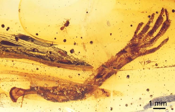 Вчені знайшли у бурштині лапу ящірки, як…