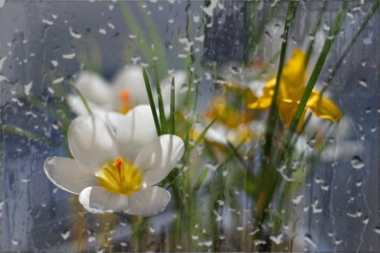 Субота в Києві буде теплою та дощовю, а…
