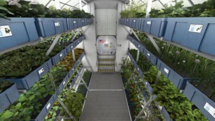 Вчені виростили салат на міжнародній кос…